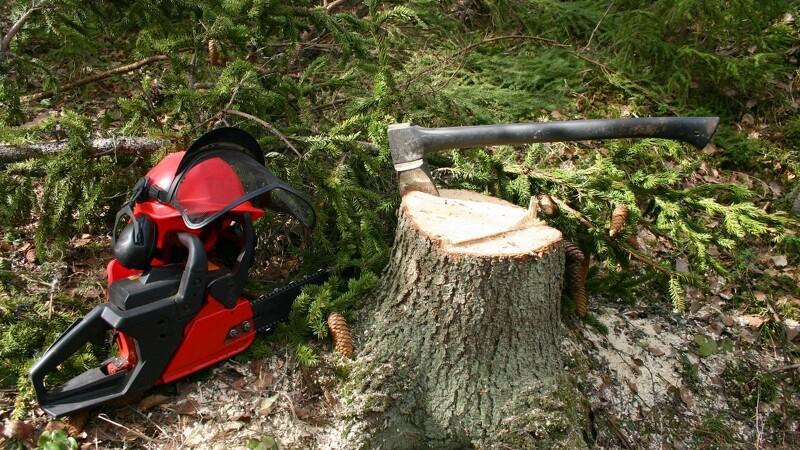 Mand dømt for ulovlig fældning af træ til 125.000