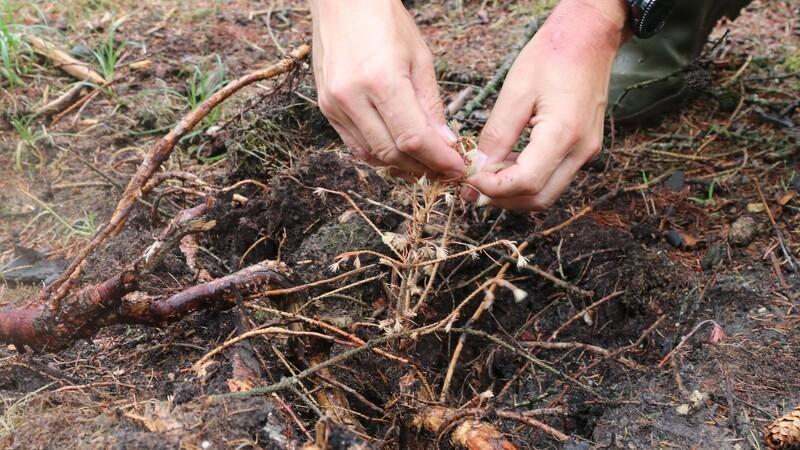 Offentlig forskning i skov svinder ind