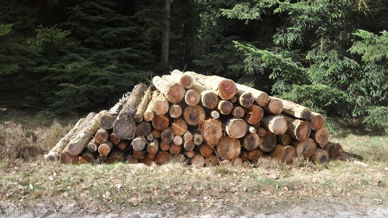 Mere PEFC-træ i Danmark