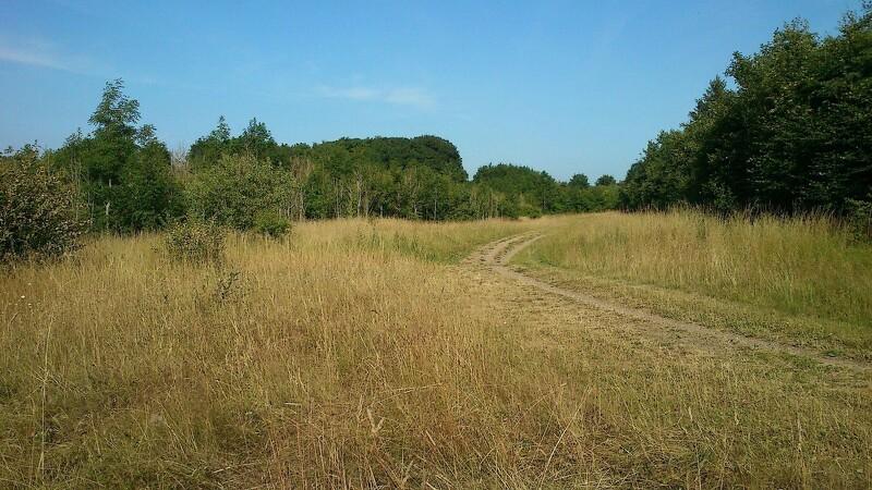 Ny rapport: True Skov kan blive friluftsperle