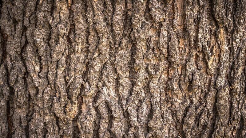 Forskere vil bruge bark imod parasitter
