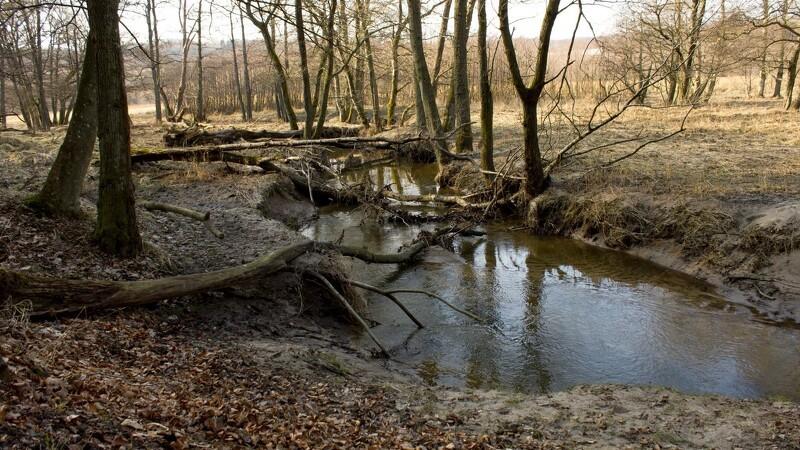 I Aarhus vil de have vilde skove
