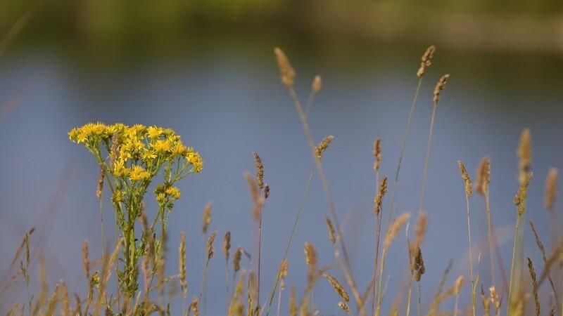 Naturen vokser frem af landbrugsjorden