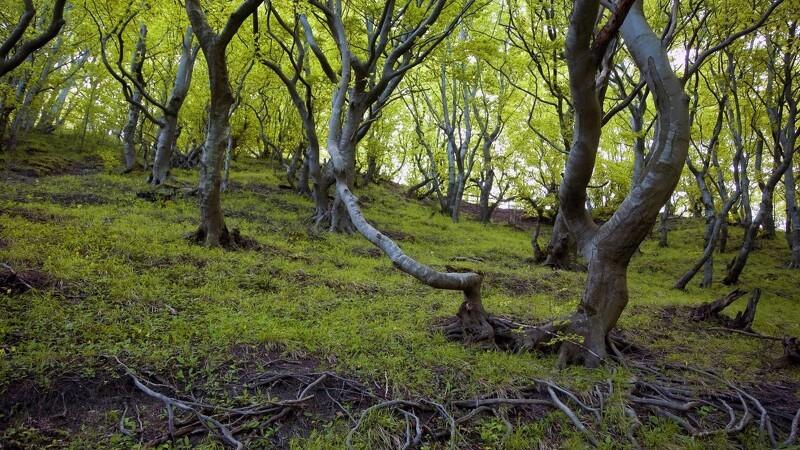 112,7 nye millioner til skov og truede arter