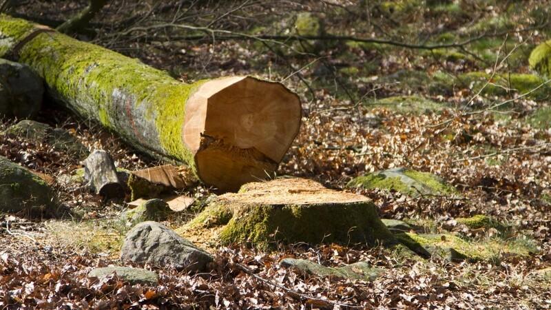 Naturfredningsforening raser over træfældning - det strider mod lokalplanen
