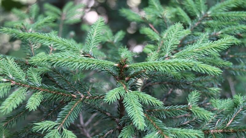 Uvejr ødelægger juletræer for en million kroner