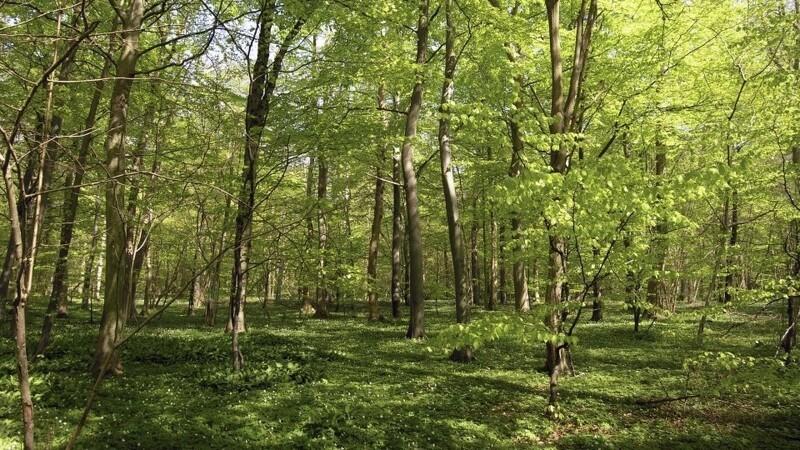 Ny regering leverer massive skov-ambitioner