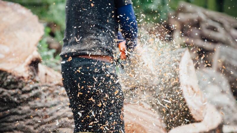 Skovbrugselever skal kæmpe til Langesø