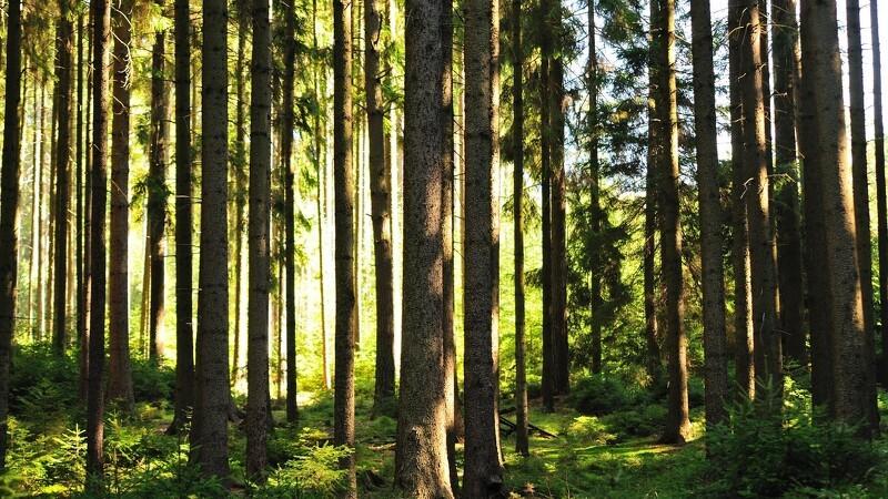 Skoven breder sig i Europa