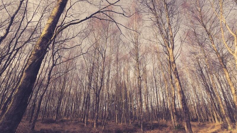 Finanslov sender millioner til nye skove