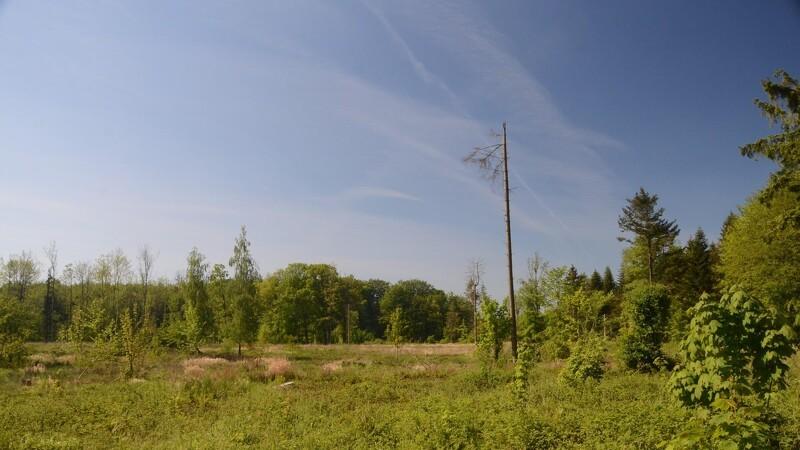 Urørt skov gør klimaet en bjørnetjeneste