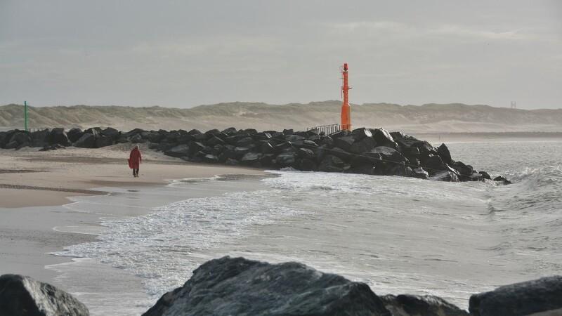 Gode takter ved forsøg med biologisk kystsikring