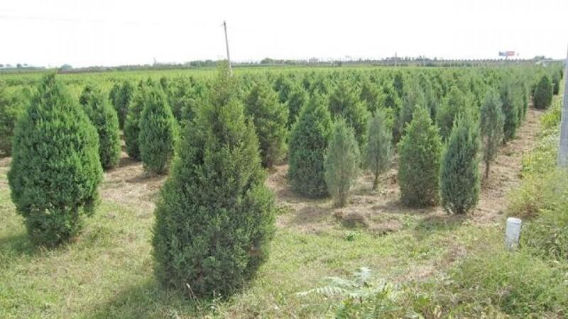 I Kina har man plantet 66 milliarder træer