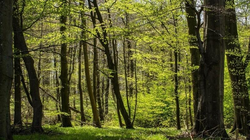 'Danmark planter træer' gav over 20 millioner kroner