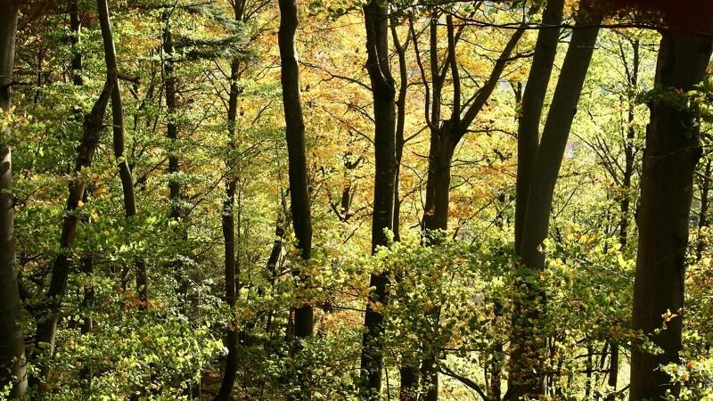 Vilde skove vokser frem over hele landet