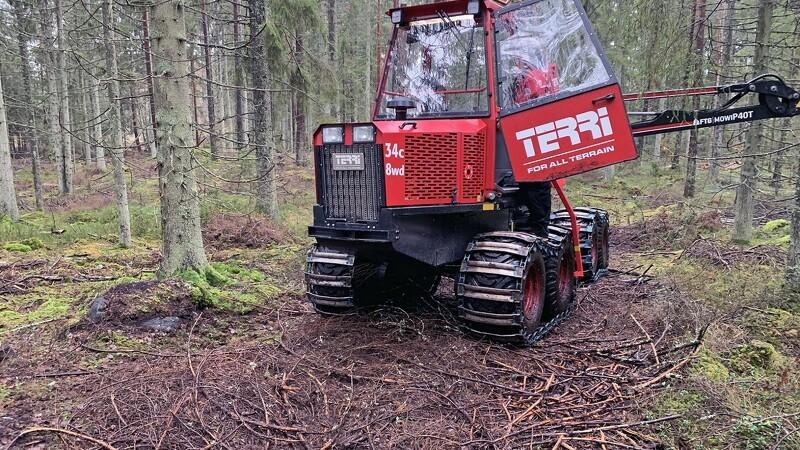 Svensk tre-i-éner lister af sted i skoven
