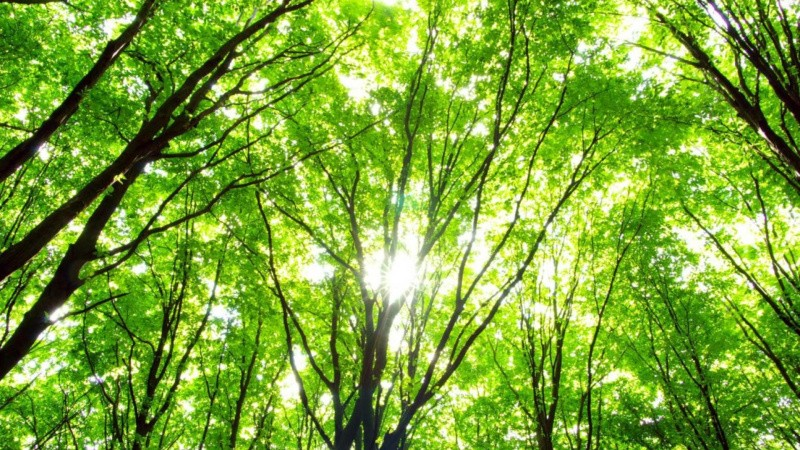 Danske virksomheder planter Folkeskove sammen med kunderne
