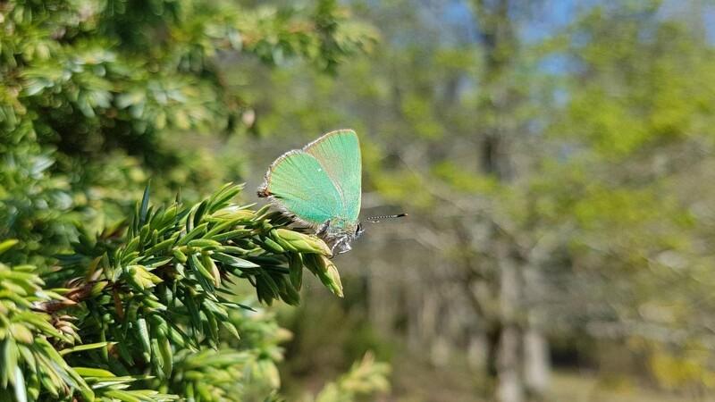 40.000 arter er på plads i Naturbasen