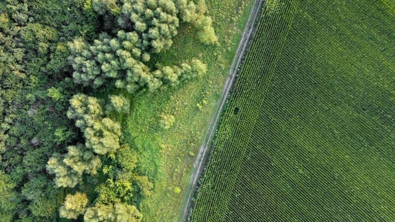 Træer skal skyde op på danske marker