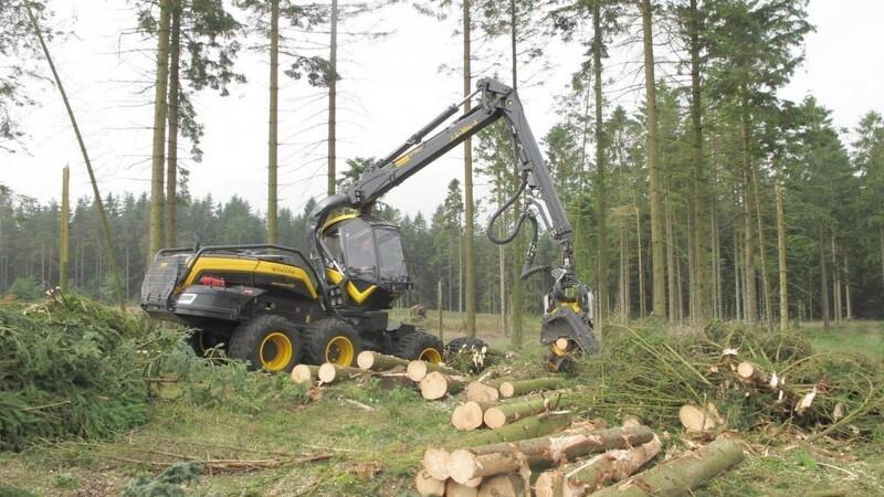 Forskere: Dansk biomasseafbrænding smadrer estiske skove