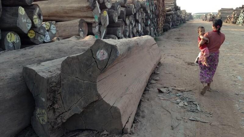 Jysk virksomhed dømt for ulovlig import af regnskovstræ