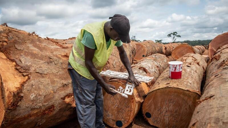International konference om tropisk træ rykker online