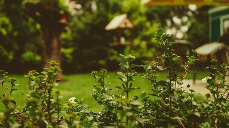 Få den skønneste have