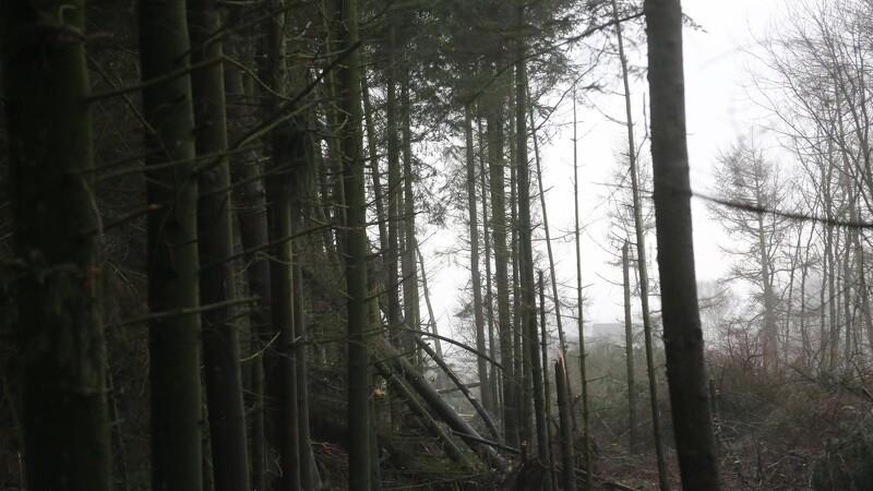 Horsens får Danmarks første gravplads i privat skov