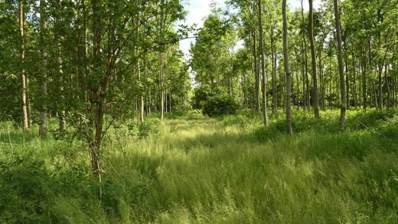 Statsskove vokser med 600.000 træer hvert år